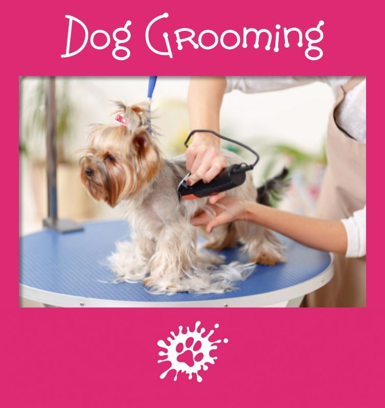 dog grooming bromley kent